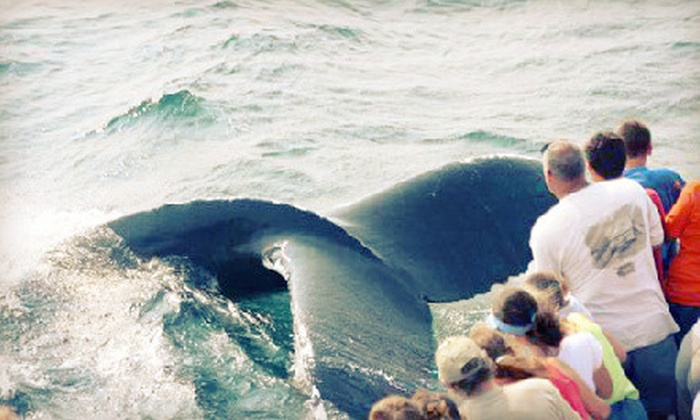 Capt John Whale Watching and Fishing Tours - Captain John Whale Watching and Fishing: $53 for a Whale-Watching Tour for Two from Captain John Whale Watching and Fishing Tours in Plymouth (Up to $90 Value)