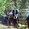 52% Off Trail Ride for Two in Sevierville