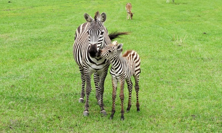Safari and Lemur Feeding for One or Two at Safari Wilderness Ranch (Up to 50% Off)