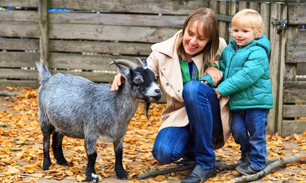 $300 for a 90-Minute Party Package with Pony Rides and Mini Animals from The Teeny Tiny Farm ($500 Value)