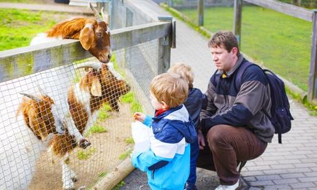 Visita al zoo con acceso a parque multiaventura para 1, 2, 4 o 6 personas desde 6,95 € en la sierra de Hornachuelos