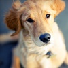 Up to 60% Off Doggy Daycare and Boarding