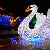 39% Off Admission to U.S. Bank Wild Lights at Saint Louis Zoo