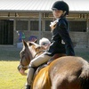 Up to 51% Off Private Horseback-Riding Lessons