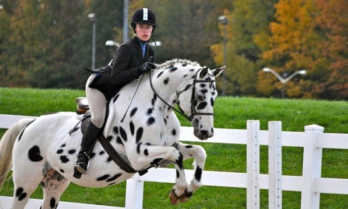 Caledon Equestrian School - Caledon East: Horseback Riding Lessons for One or Two at Caledon Equestrian School (Up to 54% Off)