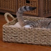 Woven Seagrass Pet Bed with Pillow
