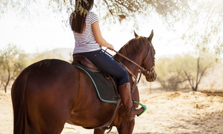 $99 for Three Horseback-Riding Lessons at Setting Sun Stables ($225 Value)