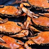51% Off Guided Hand-Crabbing Trip in Bluffton