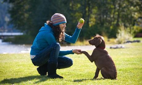 Taller de adiestramiento canino para una o dos personas desde 19,90 €