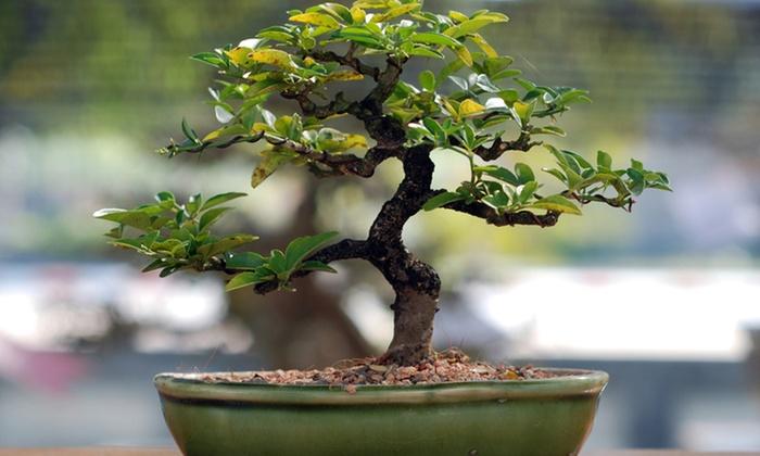 Miami Tropical Bonsai - Redland Citrus Orchards: 15% Off Bonsai Tools and Garden Tour for Two, Four, or Six at Miami Tropical Bonsai (Up to 54% Off)