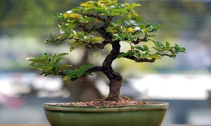 Miami Tropical Bonsai: 15% Off Bonsai Tools and Garden Tour for Two, Four, or Six at Miami Tropical Bonsai (Up to 54% Off)