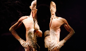 """""""bodies: The Exhibition"""" Or """"extreme Dinosaurs"""" At Atlantic Station Through November 16 (up To 42% Off)"""