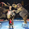 Shrine Circus – Up to 45% Off