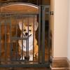 Design Studio Walk-Through Pet Gate