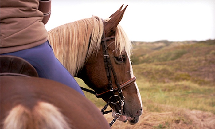 Eque Training - Burlington: One or Two 30-Minute Private Horseback Riding Lessons at Eque-Training (Half Off)