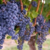 Up to 64% Off Winery Tour and Tastings