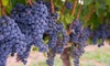 Domaine du Ridge - Domaine du Ridge: Epicurean Winery Tour and Tasting for Two or Four at Domaine du Ridge (Up to 64% Off)