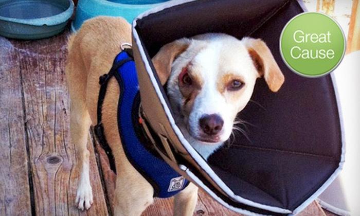 FurKidz 911 - Mill Creek: $10 Donation to Help Fund a Dog's Eye Surgery