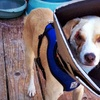 $10 Donation to Help Fund a Dog's Eye Surgery