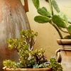 Half Off Cacti and Succulent Plants