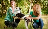 Doo Care - Chicago: Dog-Waste Cleanup from Doo Care (Up to 53% Off). Three Options Available.