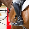 Up to 68% Off Horseback-Riding Lessons