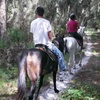 Up to 54% Off Horseback Nature Trail Rides