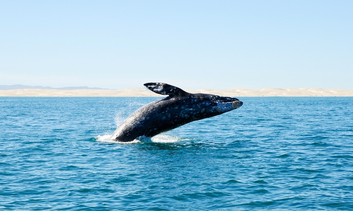 Huli Cat Sportfishing & Charter Boat - El Granada: $149 for a Three-Hour Whale-Watching Tour for Two from Huli Cat Sportfishing & Charter Boat ($200 Value)
