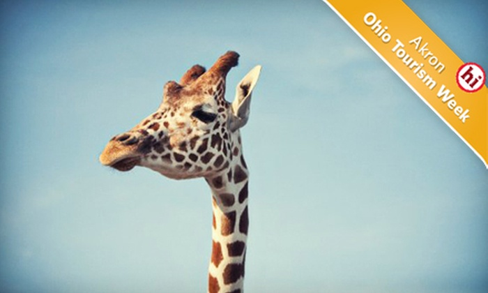 African Safari Wildlife Park‎ - Danbury: African Safari Wildlife Park Visit in Port Clinton (Up to 67% Off). Four Options Available.