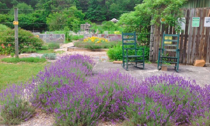 Beagle Ridge Lavender Farm Up To 42 Off Wytheville