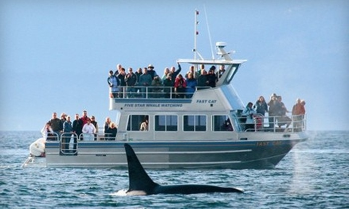 Five Star Whale Watching - Downtown: $52 for a Three-Hour Whale-Watching Tour from Five Star ($105 Value)