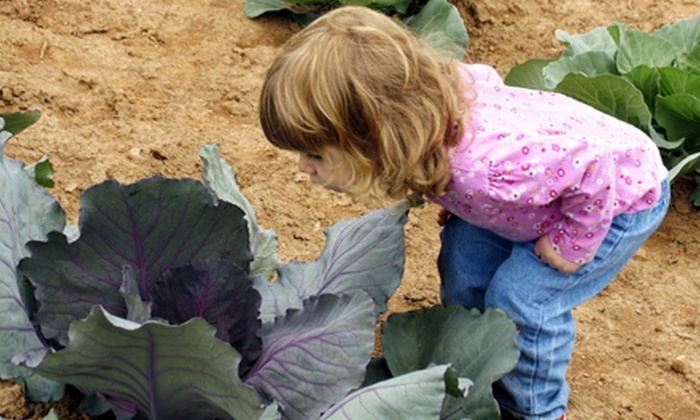Milwaukee Urban Gardens - Walker's Point: Community Garden Tour and Local Food Sampler for Two or Four from Milwaukee Urban Gardens (Up to 62% Off)