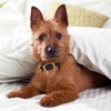 Up to 57% Off Dog Daycare at Mad About Dogs