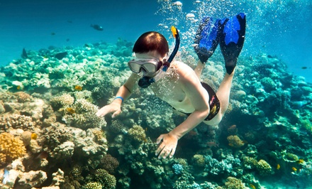 Snorkeling Cruise for One Child or Adult or an Adult Sunset Cruise from Island Magic Catamaran (Up to 52% Off)