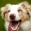 40% Off Dog Park Membership