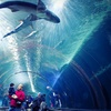 Aquarium of the Bay – Up to 55% Off Membership
