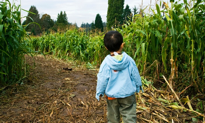 Talladay Farms - Milan: Two or Four Tickets to a Corn Maze with Option for Haunted Maze at Talladay Farms (Up to 50% Off)