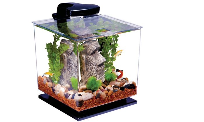 Tetra 3 Gal. Desktop Aquarium Kit with LED: $24.99 for a Tetra 3 Gal. Desktop Aquarium Kit with LED ($49.99 List Price). Free Shipping and Returns.