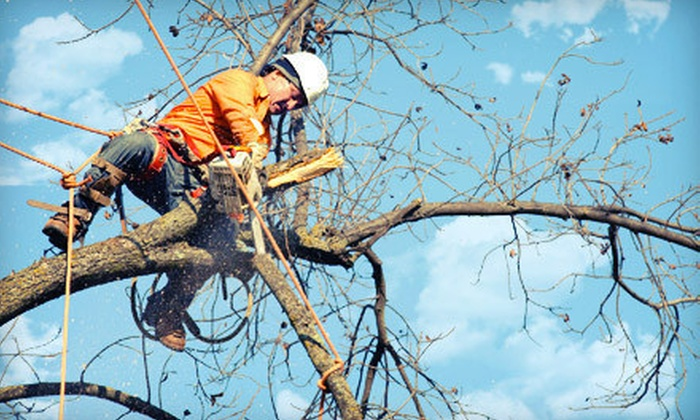 Rhino Tree Services LLC - Alpharetta: $99 for $275 Worth of Tree-Removal, Pruning, and Trimming Services from Rhino Tree Service