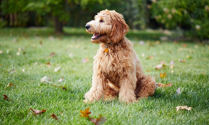 Pleasant Pooch LLC - Guthrie: Dog Boarding for One or Three Nights at Pleasant Pooch LLC (Up to 61% Off)