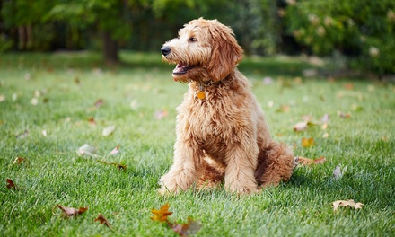Four Weeks of Dog-Waste Removal Services for One, Two, Three, or Four Dogs at Poopie Pros, LLC (Up to 50% Off)