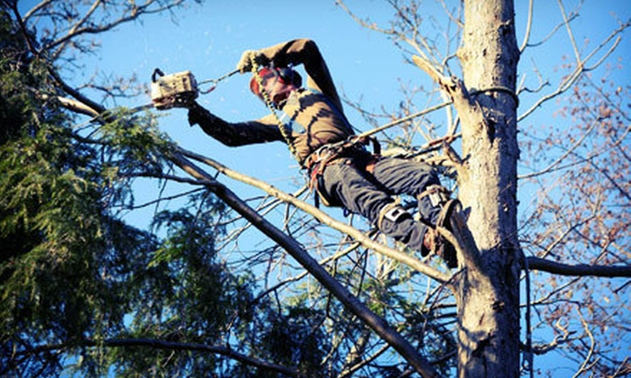 Adam's Tree And Landscaping - Culpeper: $99 for $250 towards Tree Removal Services from Adam's Tree & Landscaping