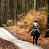 Up to 50% Off Horseback Trail Ride