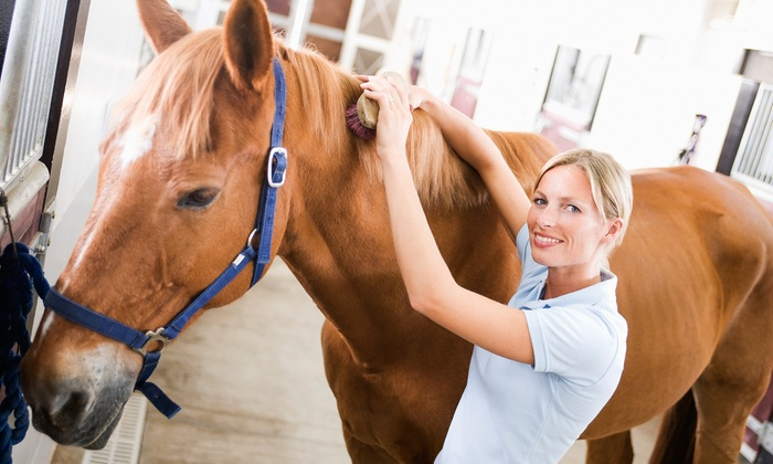 Potomac Horse Center - North Potomac: $26 for One 30-Minute Private Riding Lesson at Potomac Horse Center ($70 Value)
