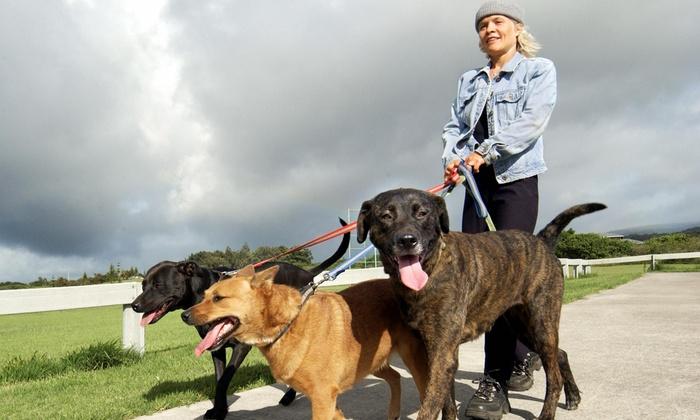 PTC Pets: Pet Sitting & Dog Walking - Atlanta: Three Dog Walks from PTC Pet Services (38% Off)