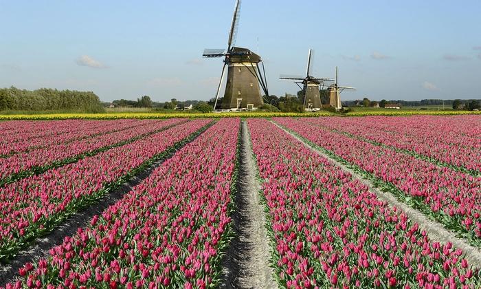 Wczasyonline24 - Wczasyonline24: Holandia: wycieczka na Festiwal Kwiatów ze zwiedzaniem Amsterdamu i więcej z biurem Wczasyonline24