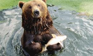 Olmense Zoo: Entrée + boisson enfant/adulte au Olmense Zoo à partir de 11,50€
