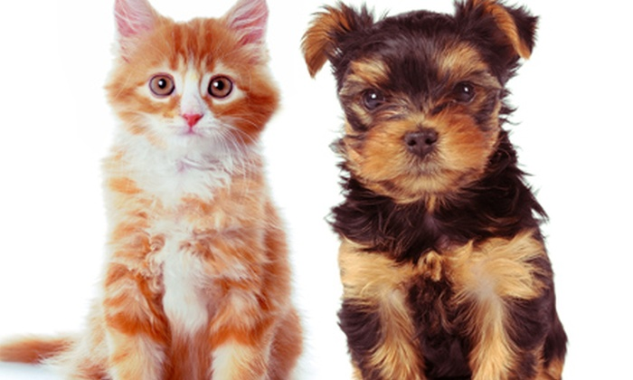 The Animal Foundation - Animal Foundation Campus: $12 for Pet Microchipping for Dog or Cat at The Animal Foundation ($20 Value)