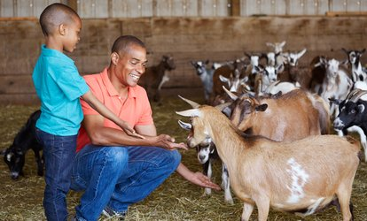 image for Petting Farm and Animal Park Admission for Two, Four, or Six to Jo-Don Farms (40% Off)