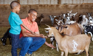 Florida's Adventures in Paradise : Entry for Two, Three, or Four to Petting Farm and Zoo at Adventures in Paradise Tours (Up to 52% Off)